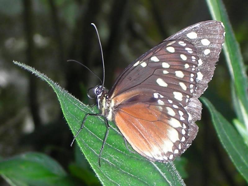 Mariposas en el Mariposario del Jardín Botánico