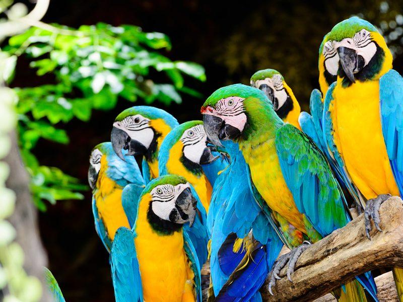 guacamayas Colombia avistamiento de aves