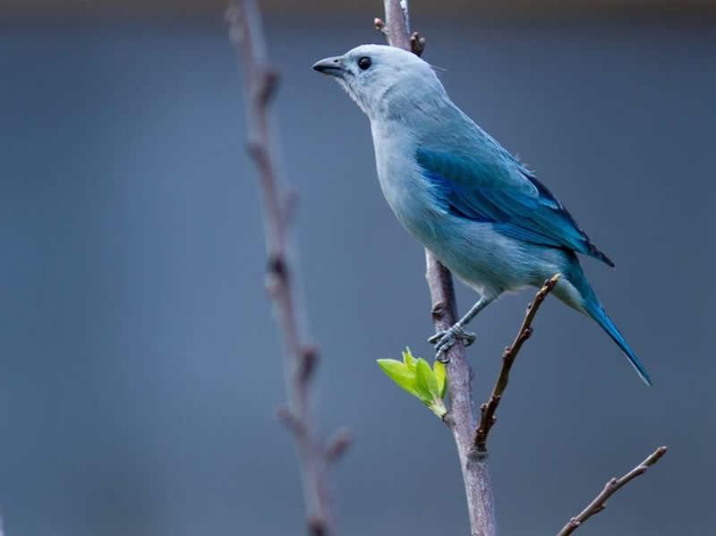 Avistamiento de aves en Génova