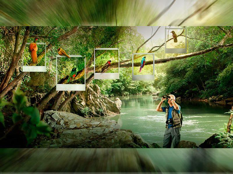 avistamiento de aves en el Quindío Colombia