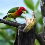 Avistamiento Animales del Parque Pacea Buenavista Quindio Colombia