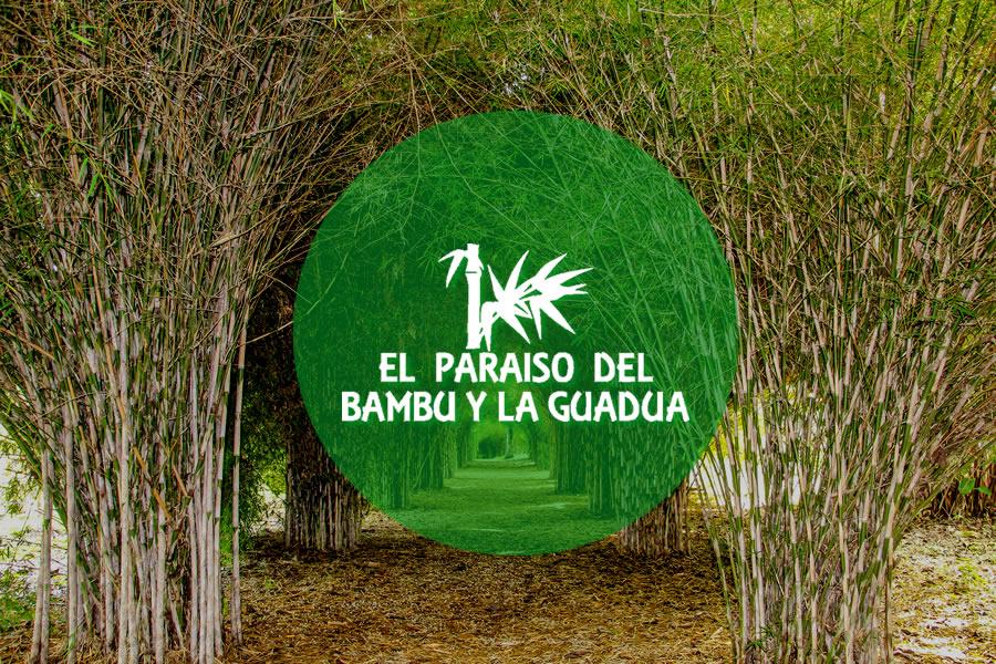 El Paraíso del Bambú y La Guadua
