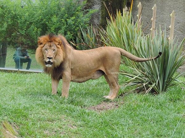 Zoológico Matecaña de Pereira