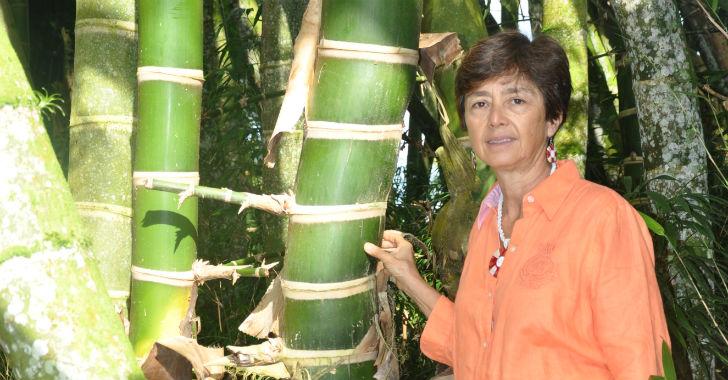 El Paraíso el Bambú y la Guadua Ximena Londoño Pava